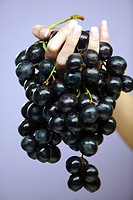Woman´s hand holding red grapes                                                                                                                       ...