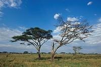 Africa, Tanzania, Serengeti ...