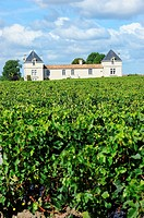 France, Gironde, St Estephe vineyard, Chateau De Pez