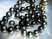 Black pearls Manihi island French Polynesian
