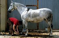 Spain, Blacksmith at work on horseshoe