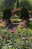 The Portland Rose Garden also known as the INTERNATIONAL ROSE TEST GARDEN has more than 8,000 rose plants _ PORTLAND, OREGON