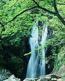 Scenic view of waterfall and trees