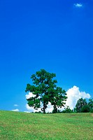 Distant view of trees on a vast grassland