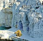 Two Polar Bear s and Penguins Safari world Bangkok , Thailand , South East Asia