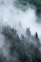 Mist in forest , Juneau, Alaska , U.S.A. United States of America