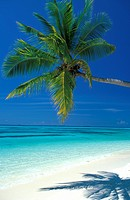 Maldives, Ari Atoll, White Sands Island
