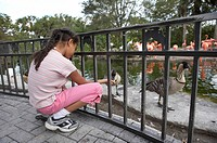 Girl at zoo looking at goose