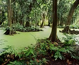 Botanical gardens of Tahiti