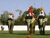 Elephant Polo, Rajastan, India
