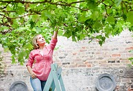 Woman reaching for grapes growing on branches overhead