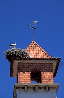 Europe, Portugal, Algarve, storks Ciconia ciconiaroosting on the roof