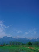 Rice paddy with snow_capped mountains in background, Ikeda, Nagano Prefecture, Japan