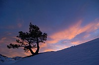 A silhouette of a tree at sunset in winter in the Sierra mountains of California.