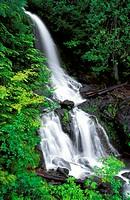 New spring growth around cascade on Falls Creek, Mount Rainier National Park, Washington