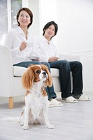 Young couple and cavalier king Charles spaniel