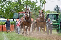 North America, Canada, Ontario, Meaford, draft horse pull at agricultural fair
