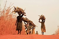Africa, Uganda, Gulu, people carrying wood
