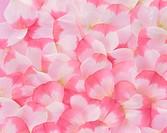 Petals of lisianthus