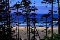 CANADA, BC, VANCOUVER IS. PACIFIC RIM N.P., VIEW OF LONG BEACH