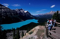 CANADA, ALBERTA, BANFF NATIONAL PARK, PEYTO LAKE, OVERLOOK, TOURISTS