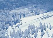 Snow Monster, Yamagata, Yamagata, Japan