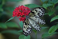 Close_up of a butterfly on a flower