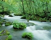 River and Woods, Aomori, Japan