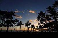 Evening Glow And Silhouette Of Palm Tree, Honolulu, Hawaii, U.S.A.