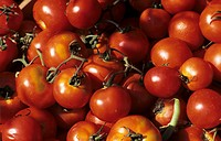 Several Vine Ripened Tomatoes