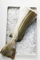 Fresh cod tail on ice