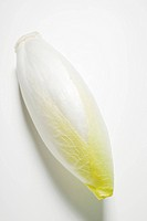 A head of chicory