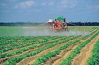 spray dithane on squash Homestead Florida