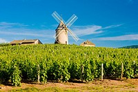 vineyards with windmill near Ch&#233;nas, Beaujolais, Burgundy, France