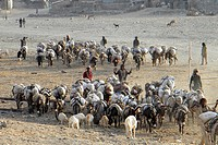 Africa, Ethiopia, Tigray Valley, farmers walking to the market