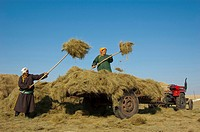 Barag Mongolian women loading hay on the truck, Old Barag Banner, Hulunbuir, Inner Mongolia Autonomous Region, China