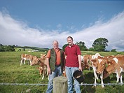 Armer and son with Guernsey calves