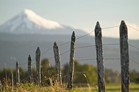 Snow_capped Osorno Volcano in the background.