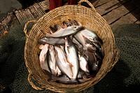 Catfish in a basket