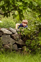 Young boy climbing stone wall in orchard