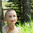 Little boy with a dandelion seed head