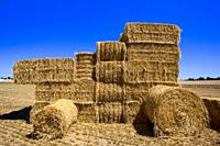 France, 85, Vendee: haystacks shaped harvester