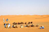 turisti nel deserto con cammelli, merzouga, marocco