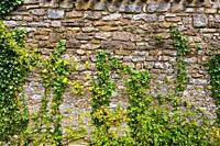 France, 85, Jard sur mer: Abbey Place-god, wall &amp, Ivy