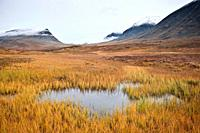 Yellow grass and bog in autumn along Kungsleden trail, Lapland, Sweden