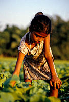 It is common for rural children to help their parents in the field It is not seen as child labour, but as a way in which they can become productive me...