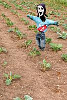 A scarecrow in the vegetable gardens at Redisham Hall open gardens in Redisham , Suffolk , England , Great Britain , Uk