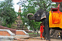 Elefant in the old kingdomtown Ayutthaya, Thailand, Asia