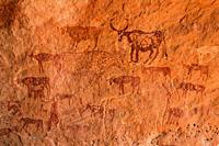 Painted domestic cows, rock art in the Akakus Mountains, Sahara Desert, Libya
