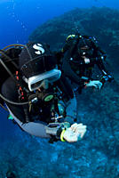 Technical Divers using Trimix, Rebreathers and technical diving equipment, Divetech, Grand Cayman, Cayman Islands, Caribbean
